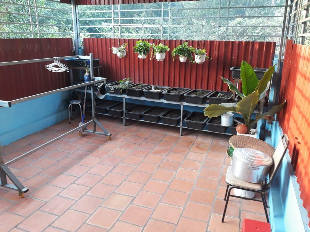 Sân sau trồng rau rộng 20m